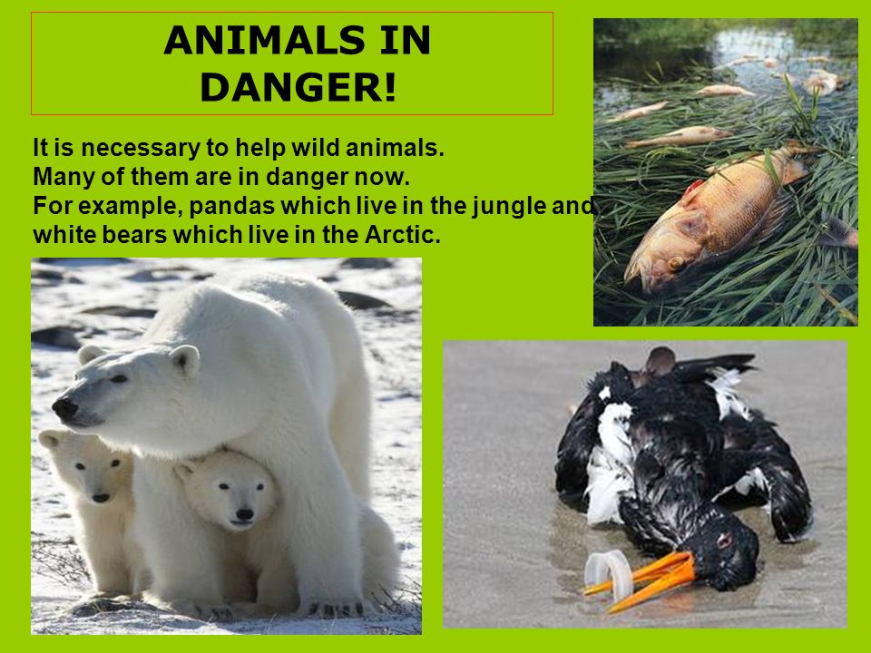 ANIMALS IN DANGER! It is necessary to help wild animals.