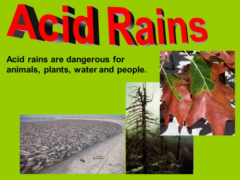 Acid Rains Acid rains are dangerous for