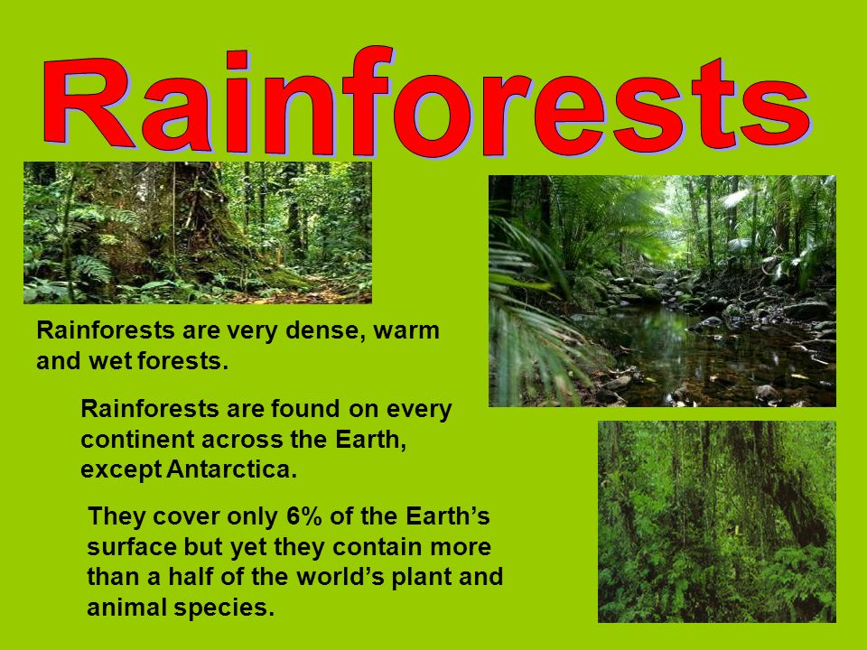 Rainforests Rainforests are very dense, warm and wet forests.