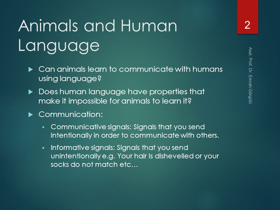 Learn To Communicate With Animals & Nature | Udemy