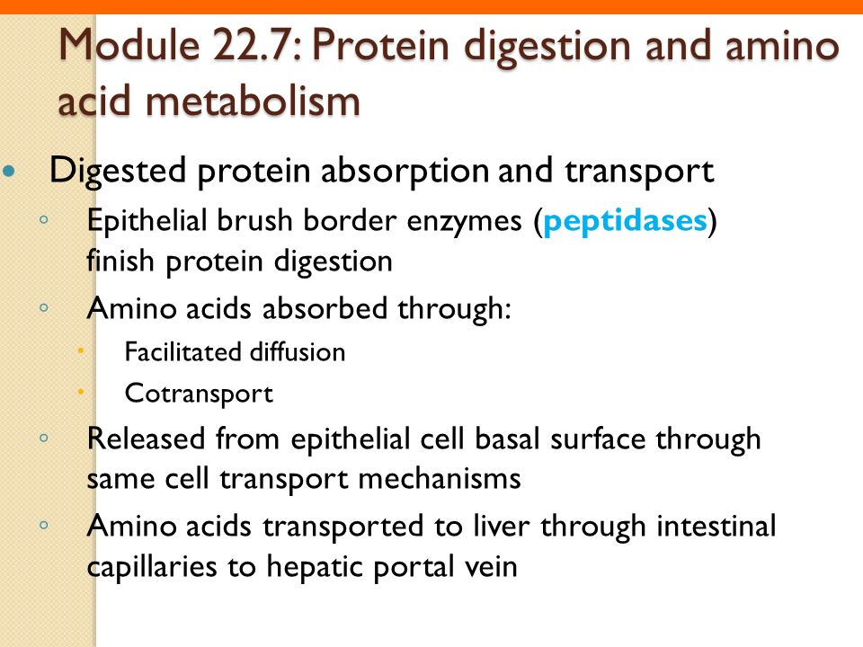 Module 22.7: Protein digestion and amino acid metabolism