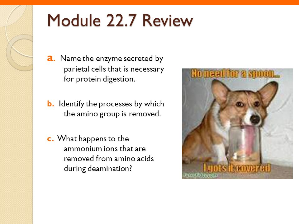 Module 22.7 Review a. Name the enzyme secreted by parietal cells that is necessary for protein digestion.
