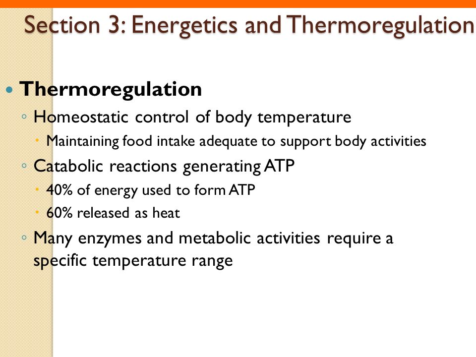 Section 3: Energetics and Thermoregulation