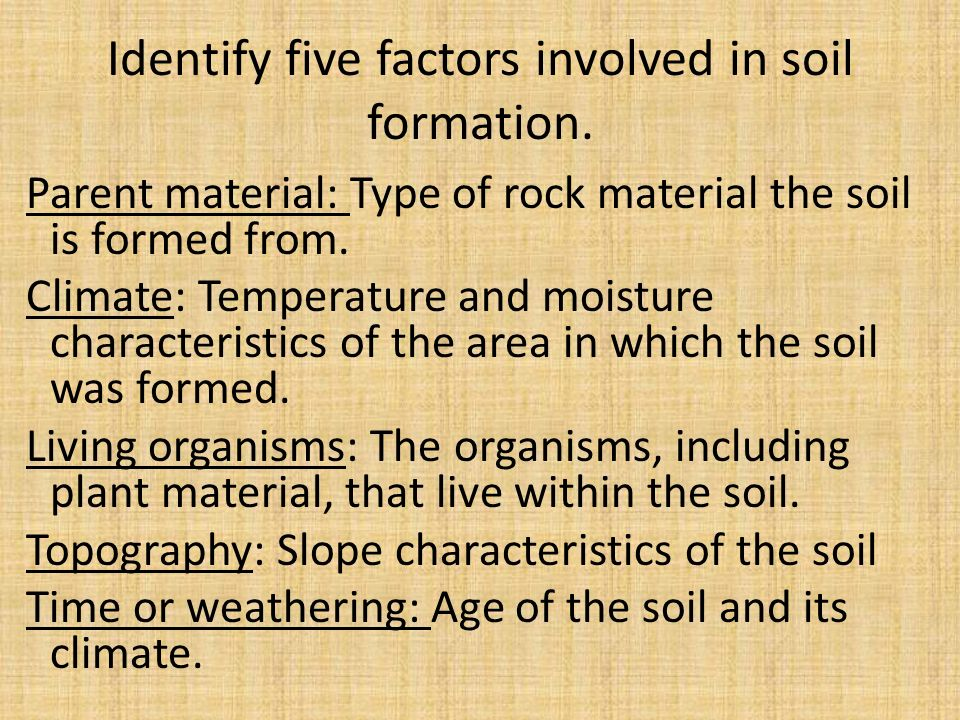 Soil 101 everything you need to know ppt download for Soil and its formation
