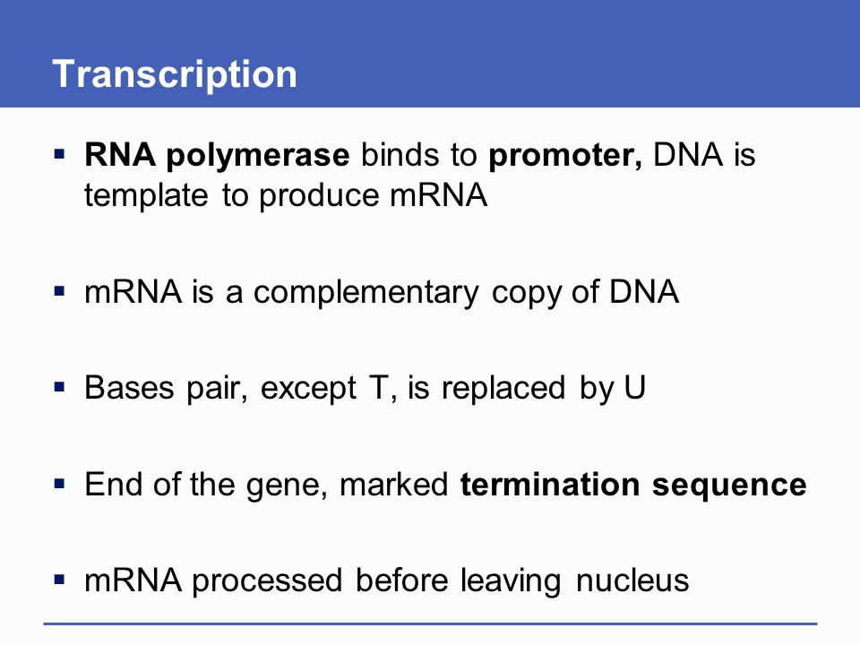 how to find mrna sequence from dna template