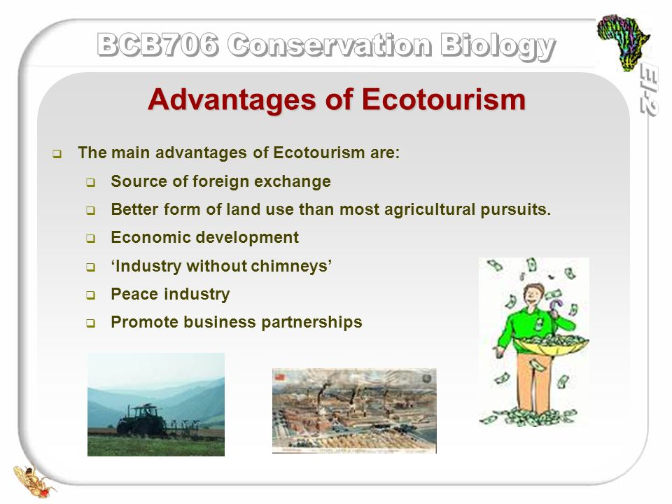 ecotourism for development in south africa Destination south africa has become one of today's most popular destinations for ecotourism travel and travel in general it has many things to offer to visitors who are looking to tour and travel nature based areas that are protected by the government.