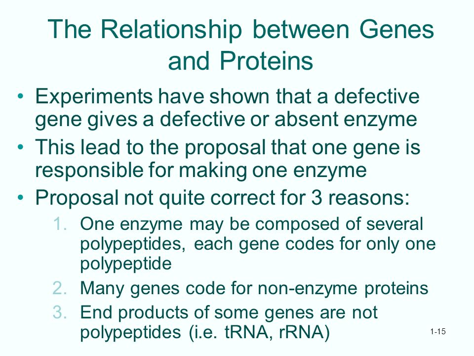 genes and proteins relationship quizzes