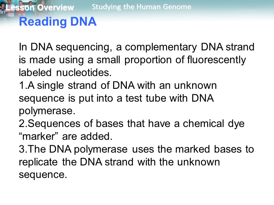 Write the complementary sequence for the following dna sequence, in order from 3 to 5: