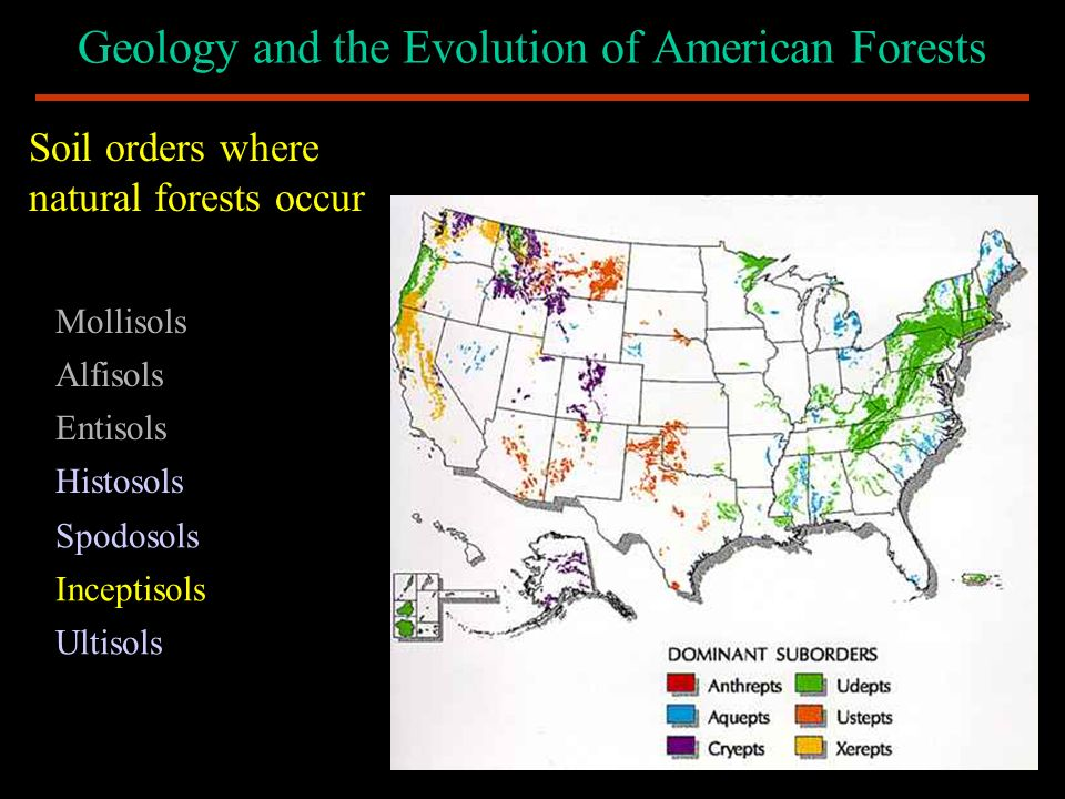 Geology and the Evolution of American Forests