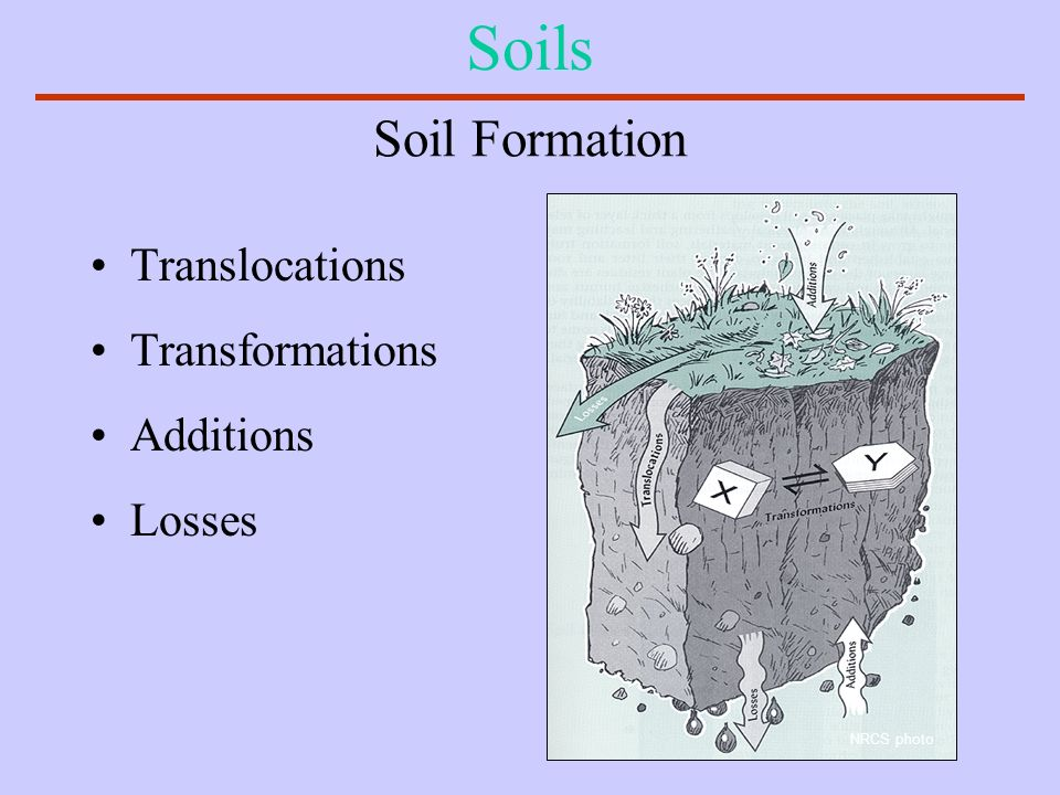 Soils Soil Formation Translocations Transformations Additions Losses