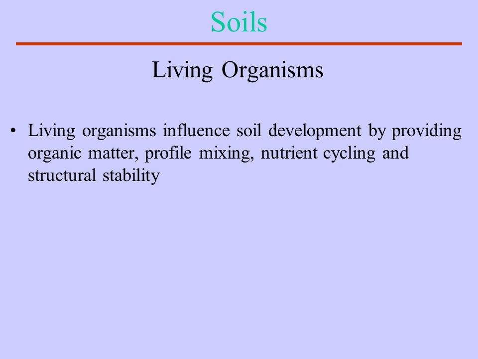 Soils Living Organisms