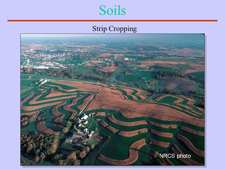 Soils Strip Cropping NRCS photo