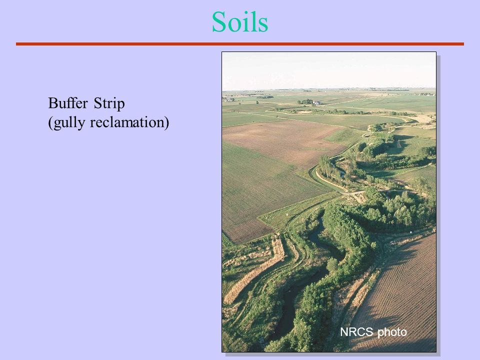 Soils Buffer Strip (gully reclamation) NRCS photo
