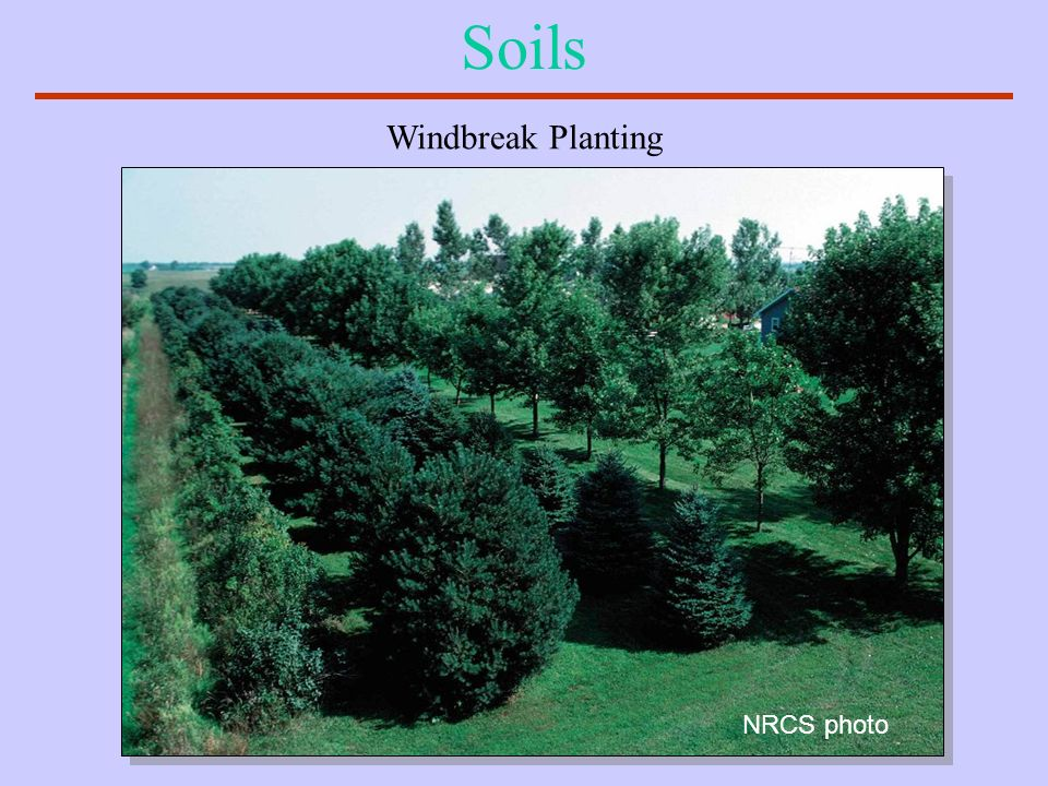 Soils Windbreak Planting NRCS photo