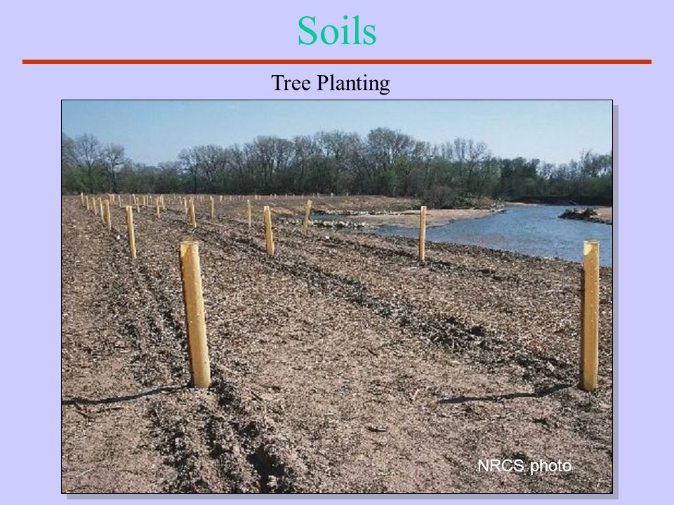 Soils Tree Planting NRCS photo