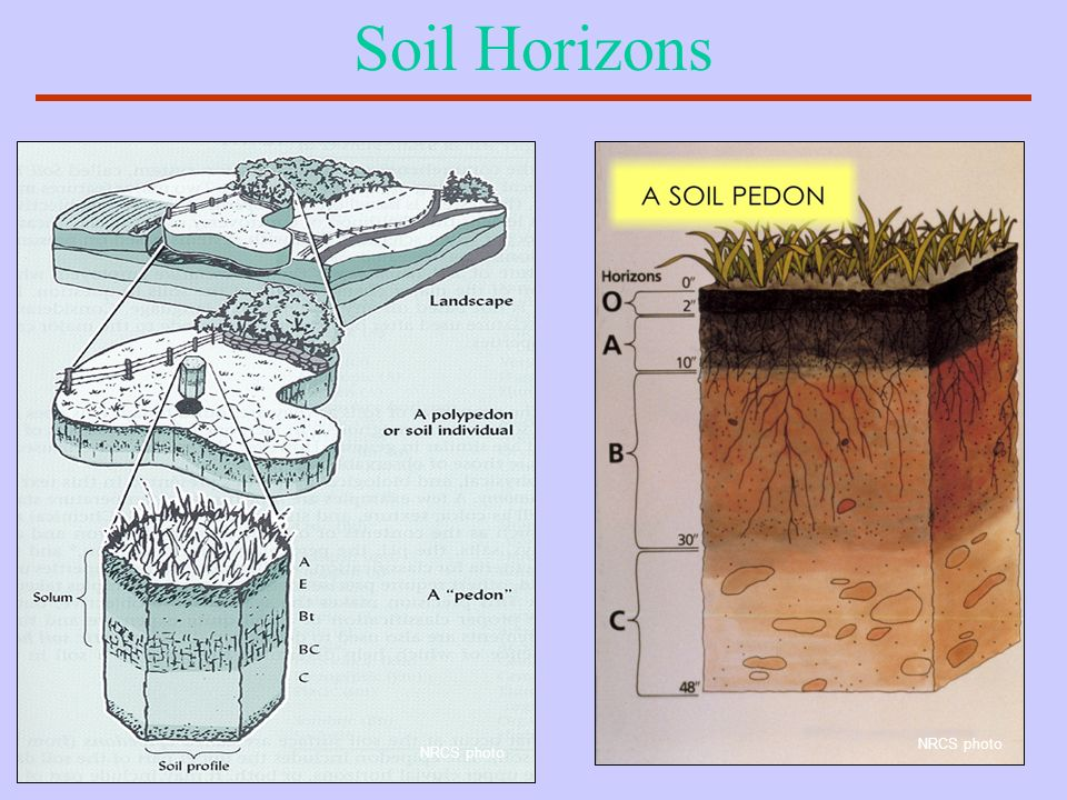 Soil Horizons NRCS photo NRCS photo