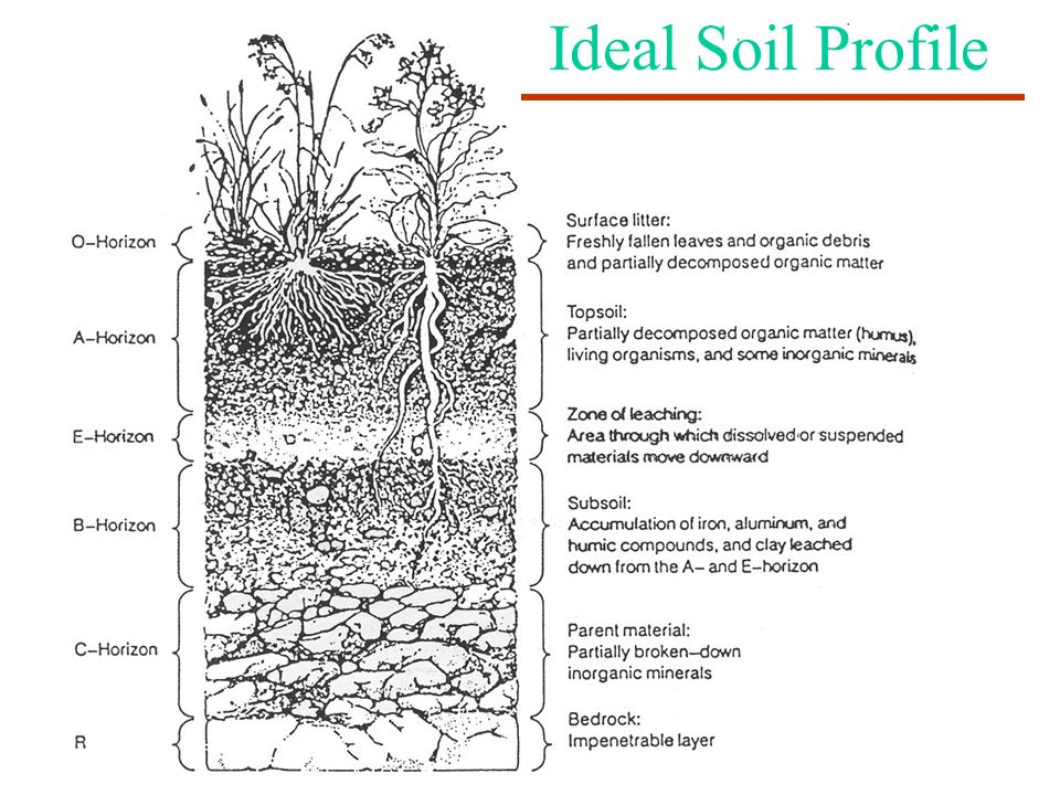Ideal Soil Profile