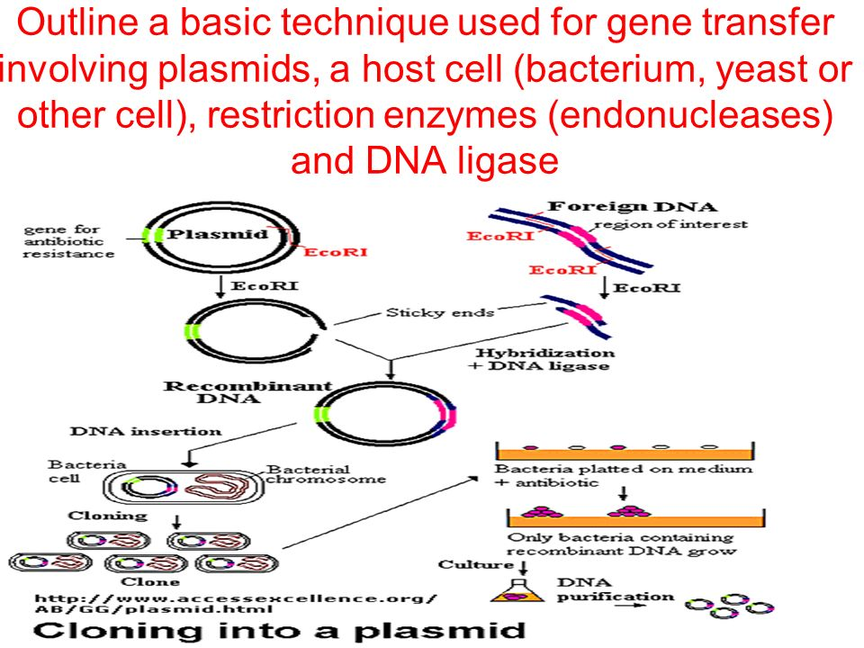 gene ablation and other genetic technique Genetic engineering is defined as the direct manipulation of an organism's genes  including  their hybrid atlantic salmon incorporates a gene from a chinook  salmon  can combine molecules of dna from different organisms encoding  different properties  diphtheria toxin systems for cellular ablation in vivo 40.