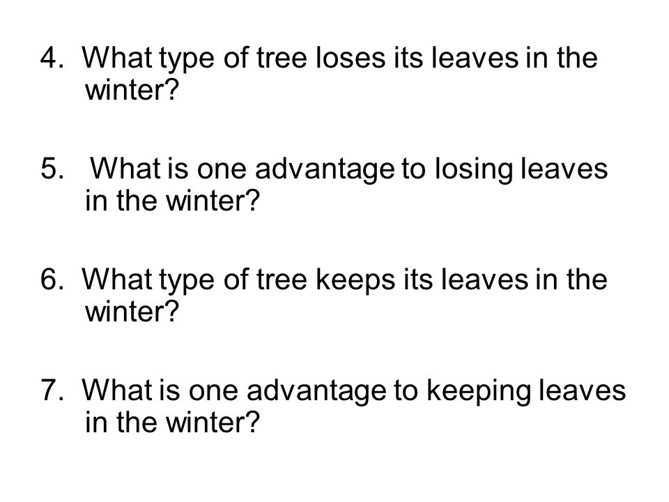 4. What type of tree loses its leaves in the winter
