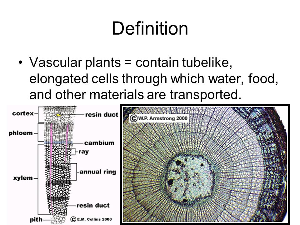 Definition Vascular plants = contain tubelike, elongated cells through which water, food, and other materials are transported.