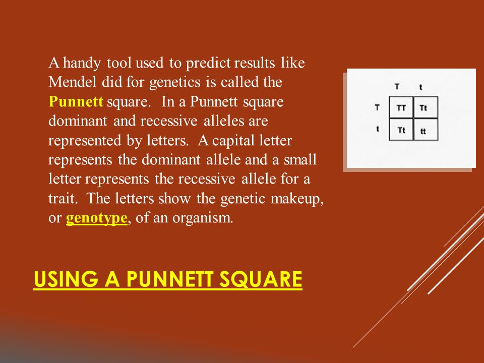 A handy tool used to predict results like Mendel did for genetics is called the Punnett square. In a Punnett square dominant and recessive alleles are represented by letters. A capital letter represents the dominant allele and a small letter represents the recessive allele for a trait. The letters show the genetic makeup, or genotype, of an organism.