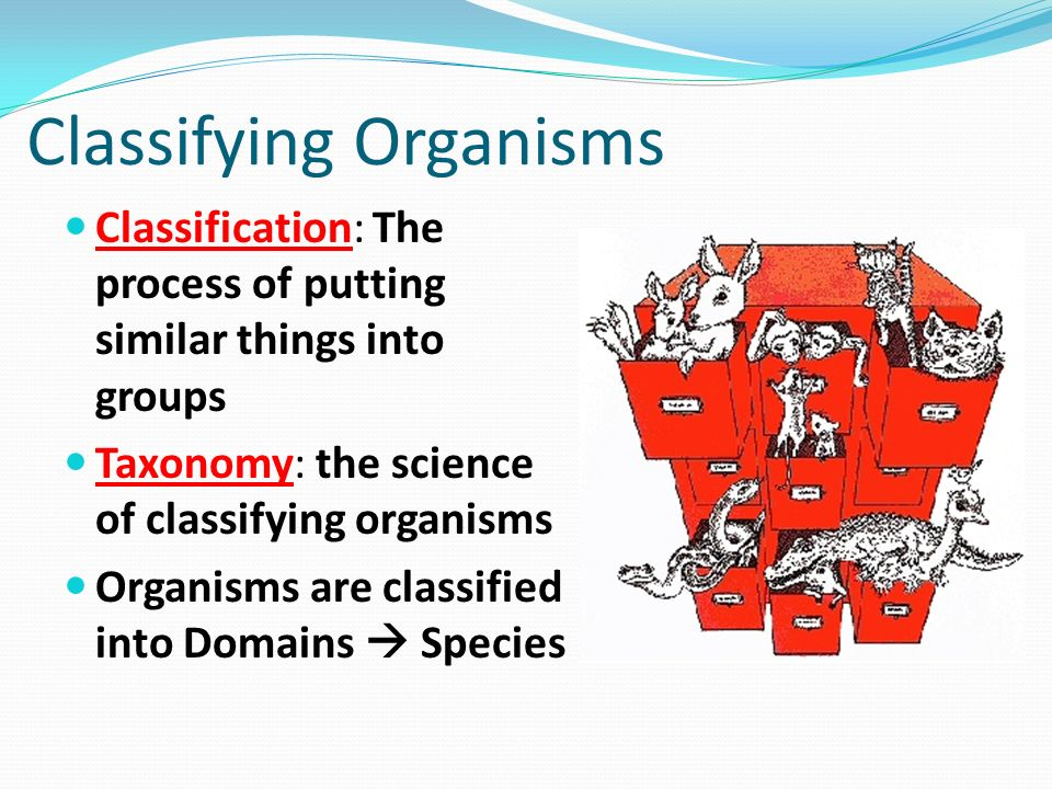 the advantages of classifying organisms