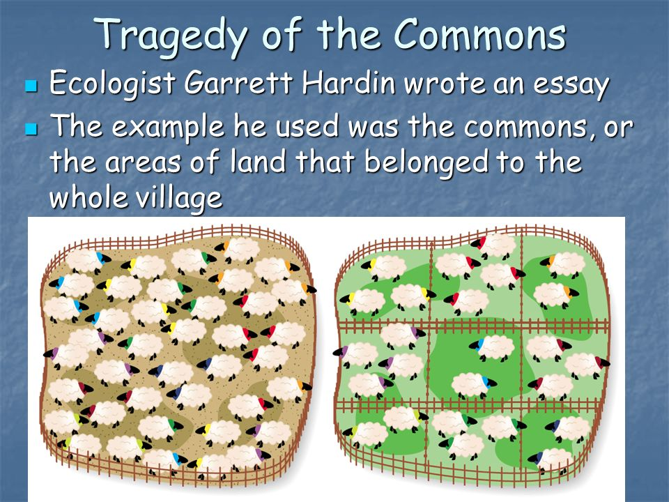 essay on tragedy of the commons For a translation by mille eriksen of the material below into danish, see: over-population is an example of the tragedy of the commons (toc.