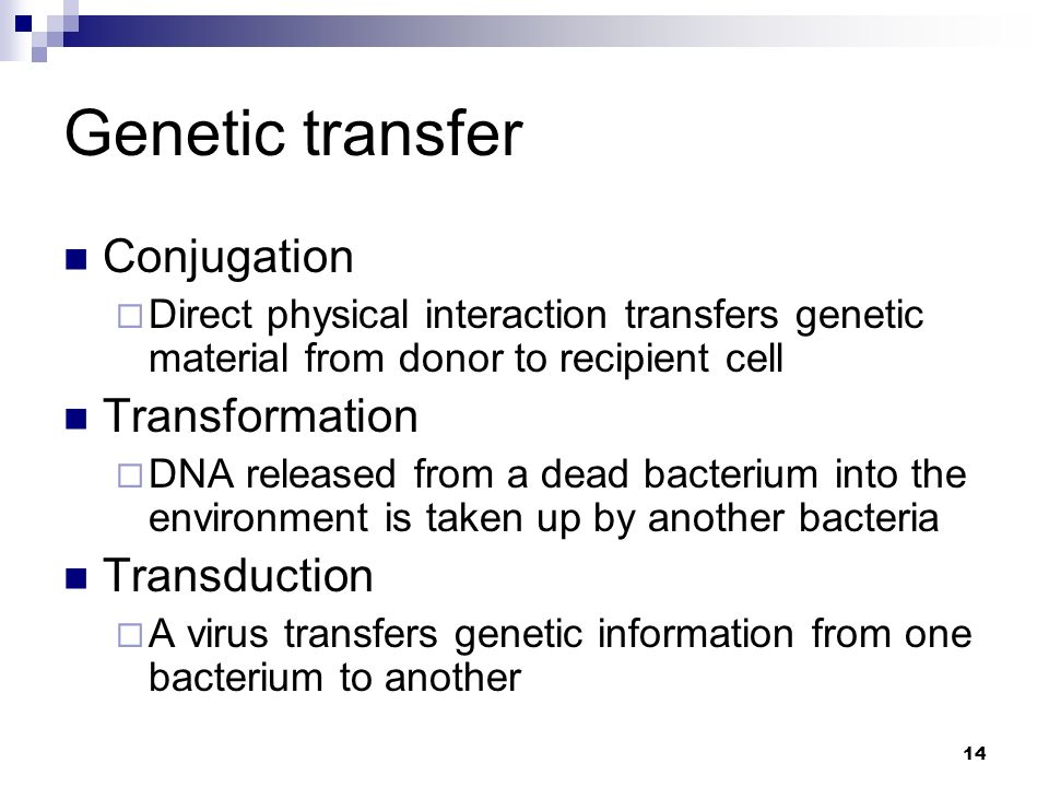 conjugation transformation and transduction Transformation vs transduction conjugation is a well-known method of dna recombination, which can be found in both eukaryotes and prokaryotes later on scientists found that dna can transfer from one bacterial cell to another by another two mechanisms namely, transformation and transduction.