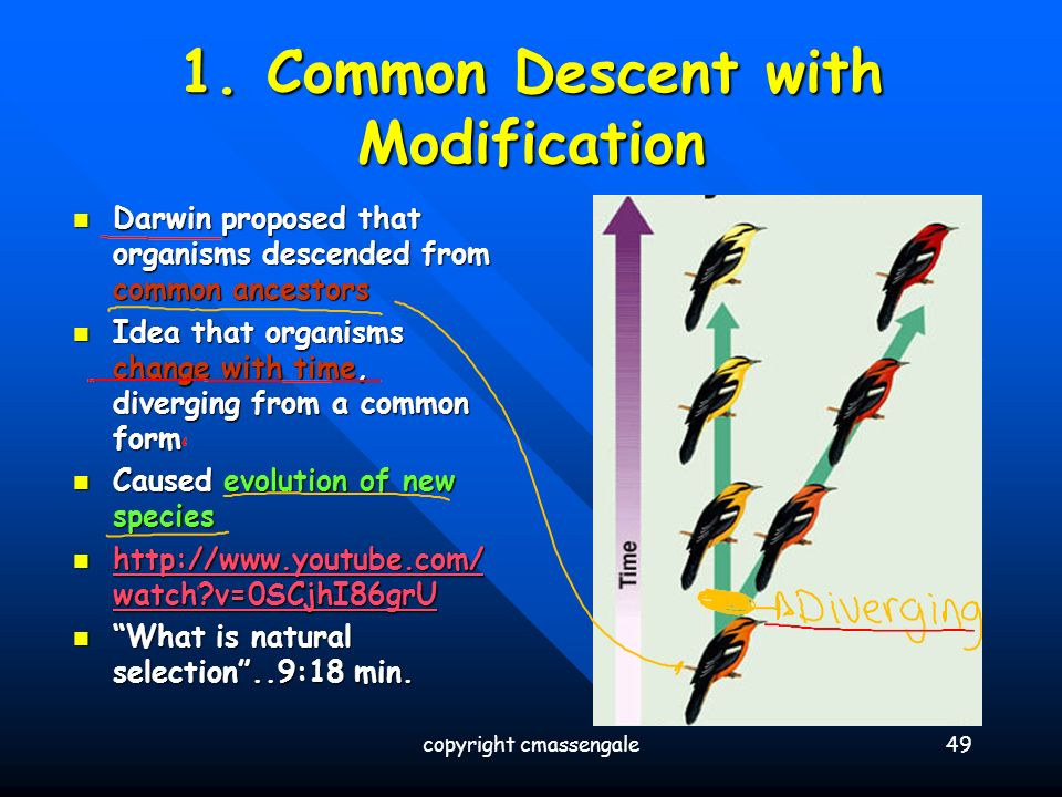 Common Descent With Modification And Natural Selection