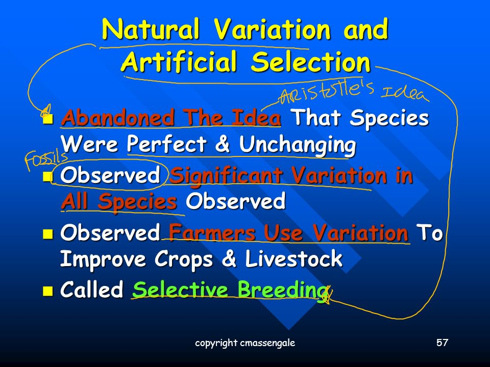 Common Ancestry and Natural Selection in Darwin's Origin