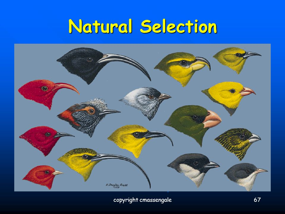 What Were Darwin S Concept Of Natural Selection