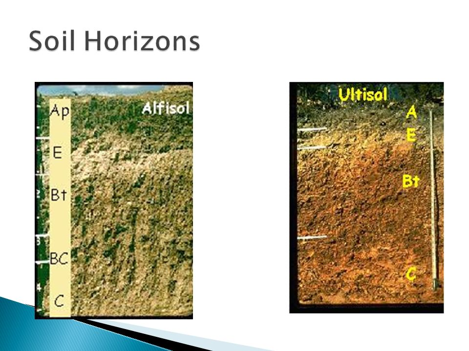 Gelisols permafrost soil ppt video online download for Soil horizons