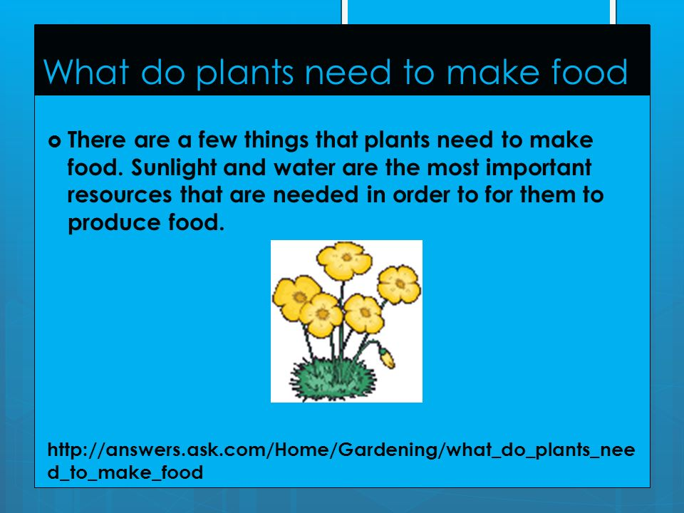 Plant power By Lana white. - ppt download