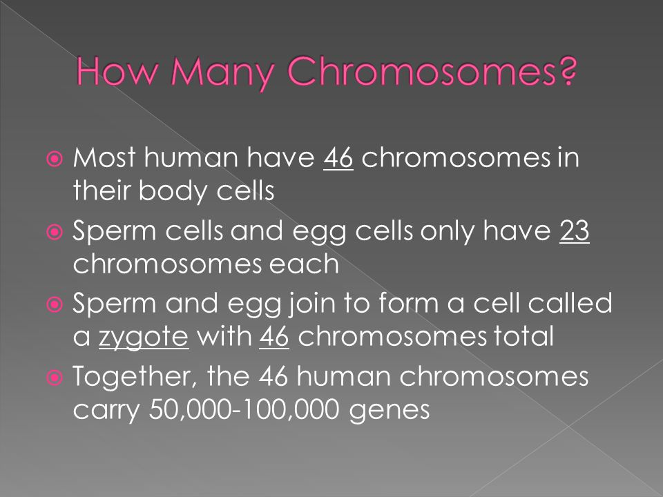 How many chromosomes does a human sex cell contain pics 24