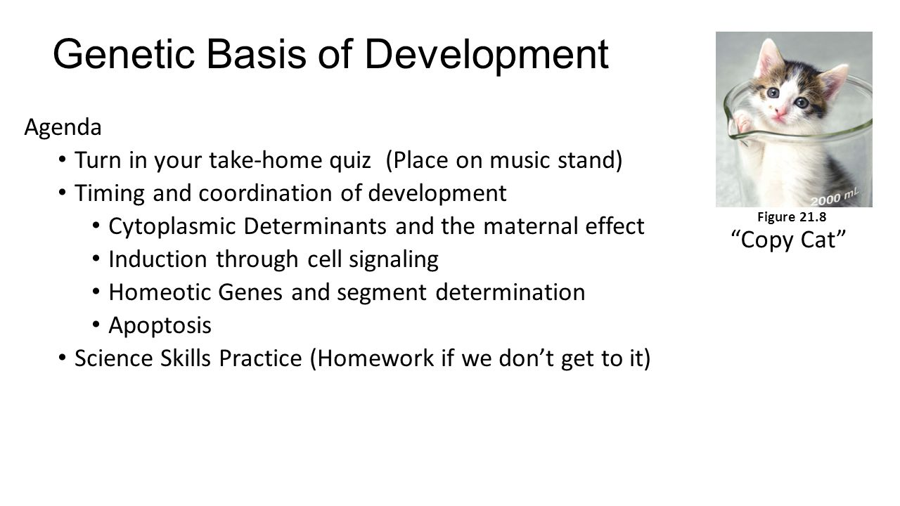 Genetic Basis of Development