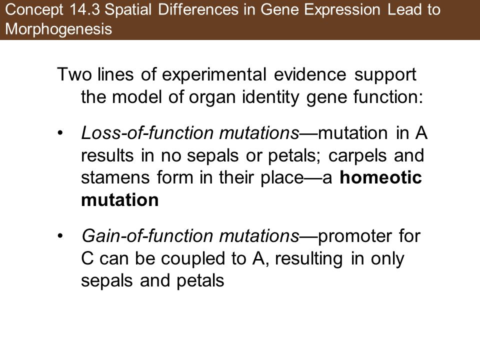Concept 14.3 Spatial Differences in Gene Expression Lead to Morphogenesis