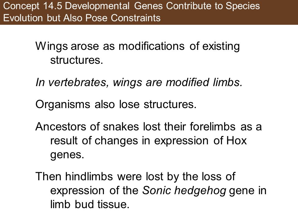 Wings arose as modifications of existing structures.