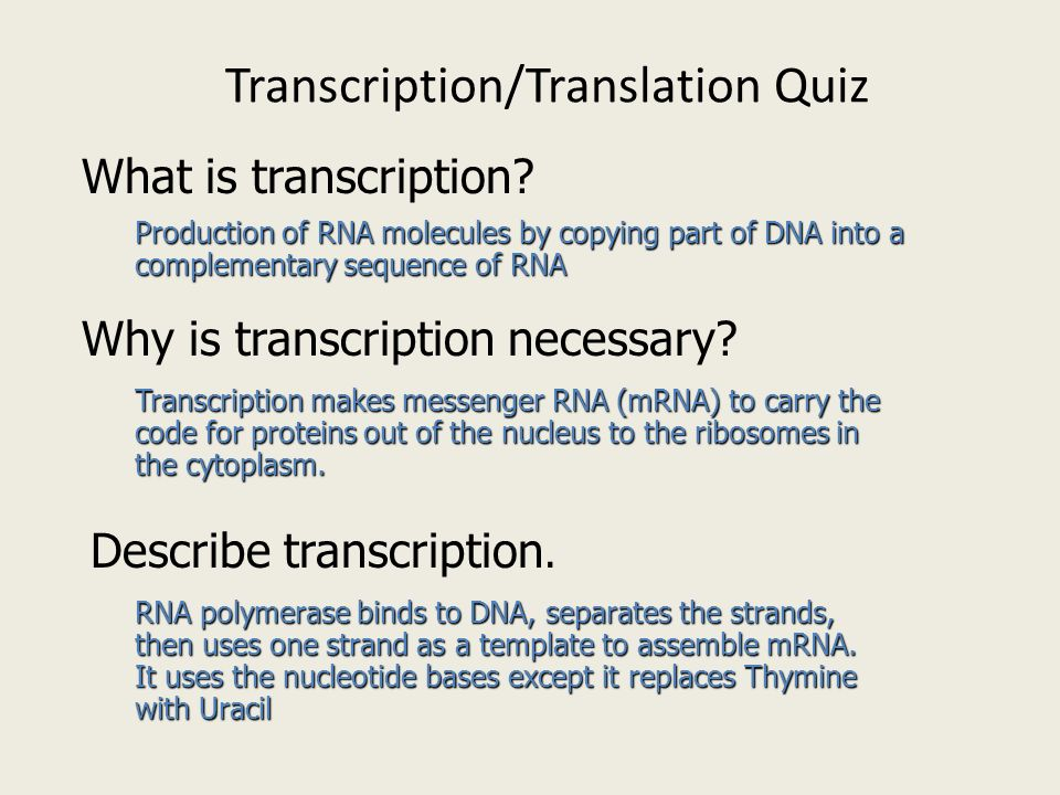transcription and translation essay Watch video lessons on dna transcription and translation and learn ribosome structure, codon recognition, operon functions, and more these lessons.