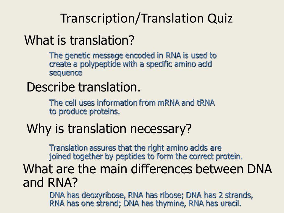 Transcription and Translation ppt download – Transcription Translation Worksheet