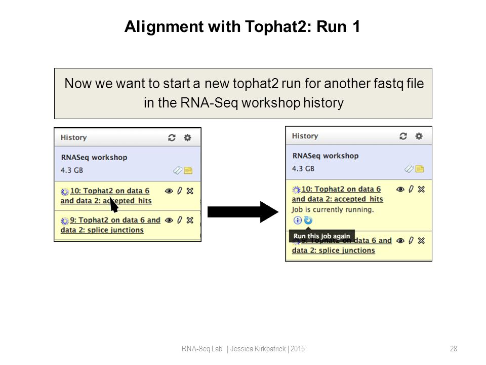 Alignment with Tophat2: Run 1