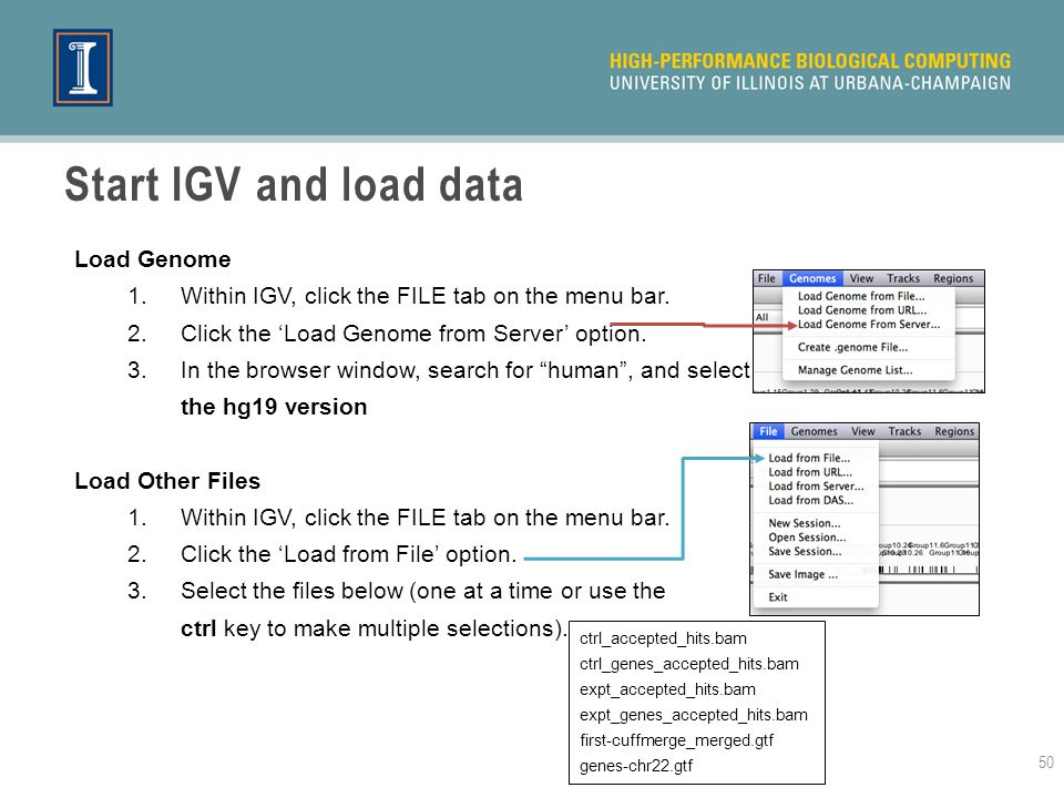 Start IGV and load data Load Genome