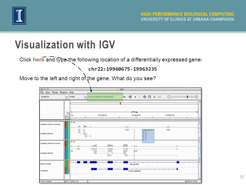 Visualization with IGV