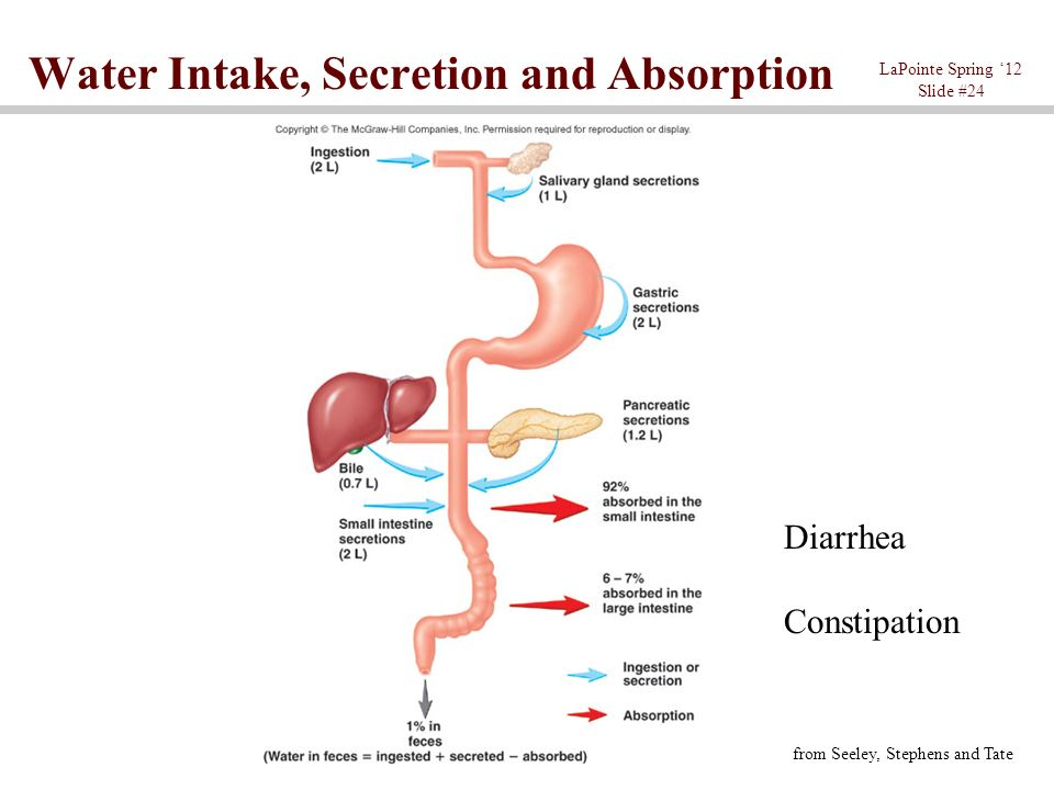 Chapter The Digestive System Ppt Video Online Download