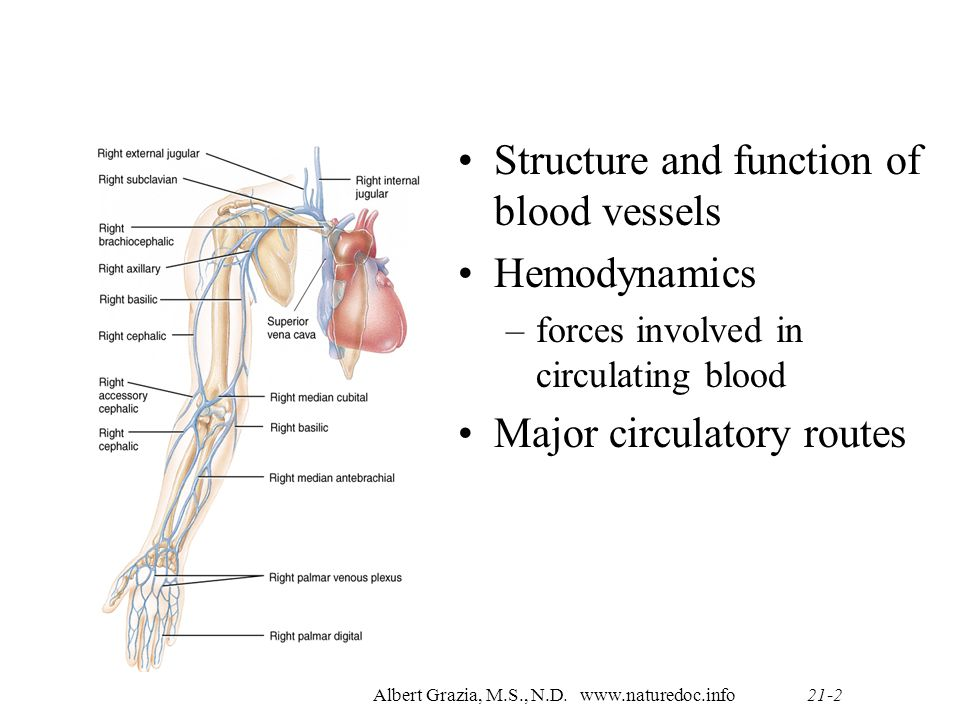 Albert Grazia, M.S., N.D. (516) Anatomy & Physiology 2 Chapter 21 ...