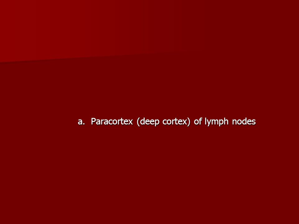 a. Paracortex (deep cortex) of lymph nodes