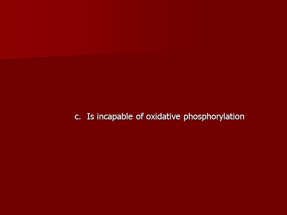 c. Is incapable of oxidative phosphorylation