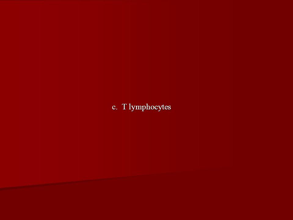 c. T lymphocytes