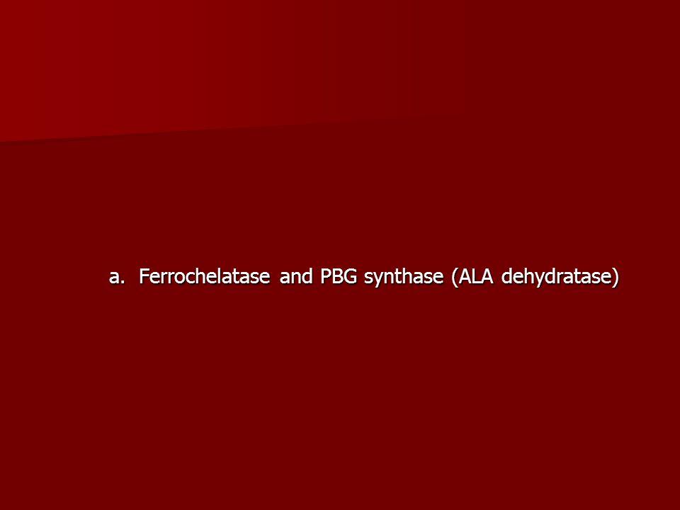 a. Ferrochelatase and PBG synthase (ALA dehydratase)