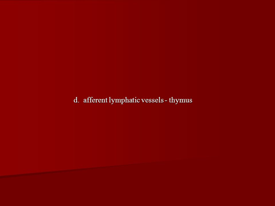 d. afferent lymphatic vessels - thymus