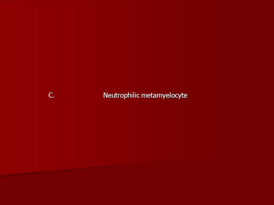 C. Neutrophilic metamyelocyte